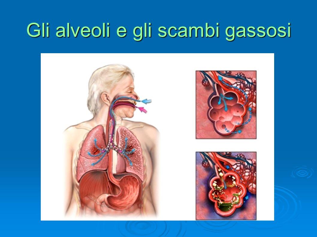 Ciglia respiratorie normali con strato di muco