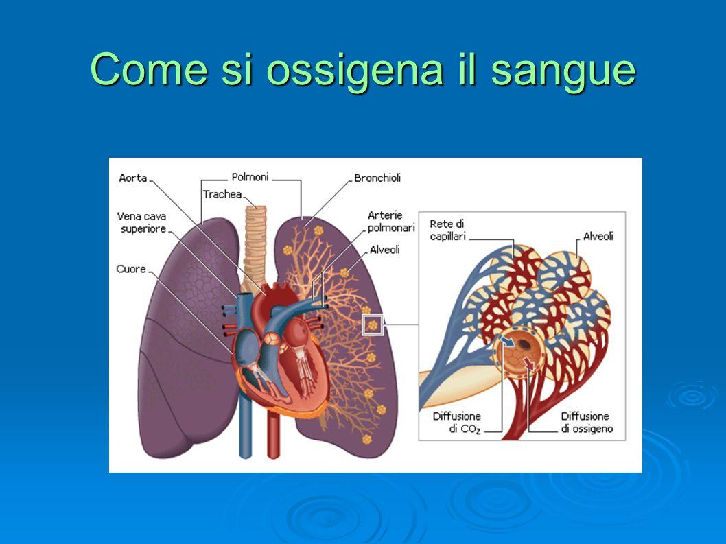 Come si muovono i polmoni