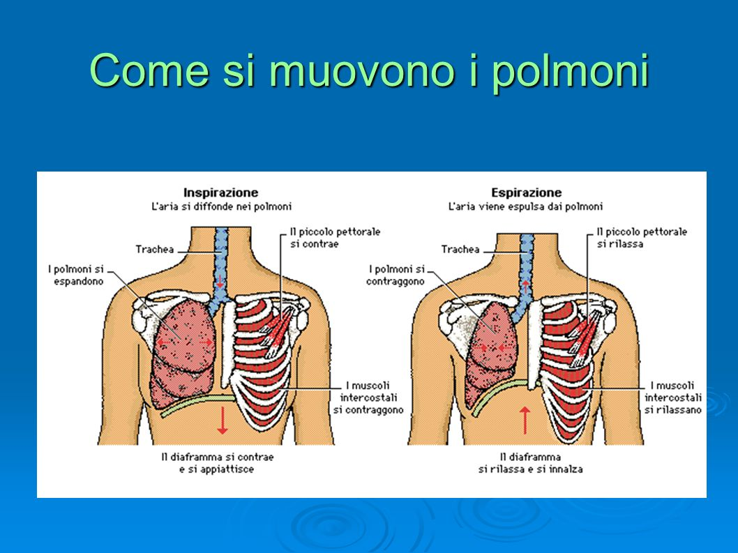 Perché si espandono i polmoni
