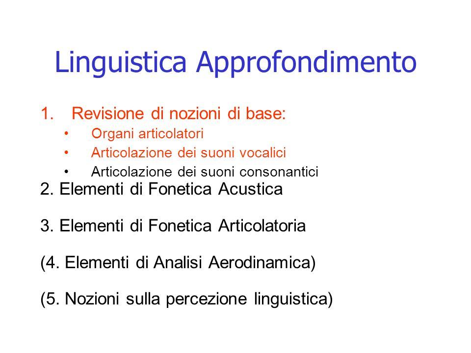 Linguistica Approfondimento 1.Revisione di nozioni di base: Organi articolatori Articolazione dei suoni vocalici Articolazione dei suoni consonantici