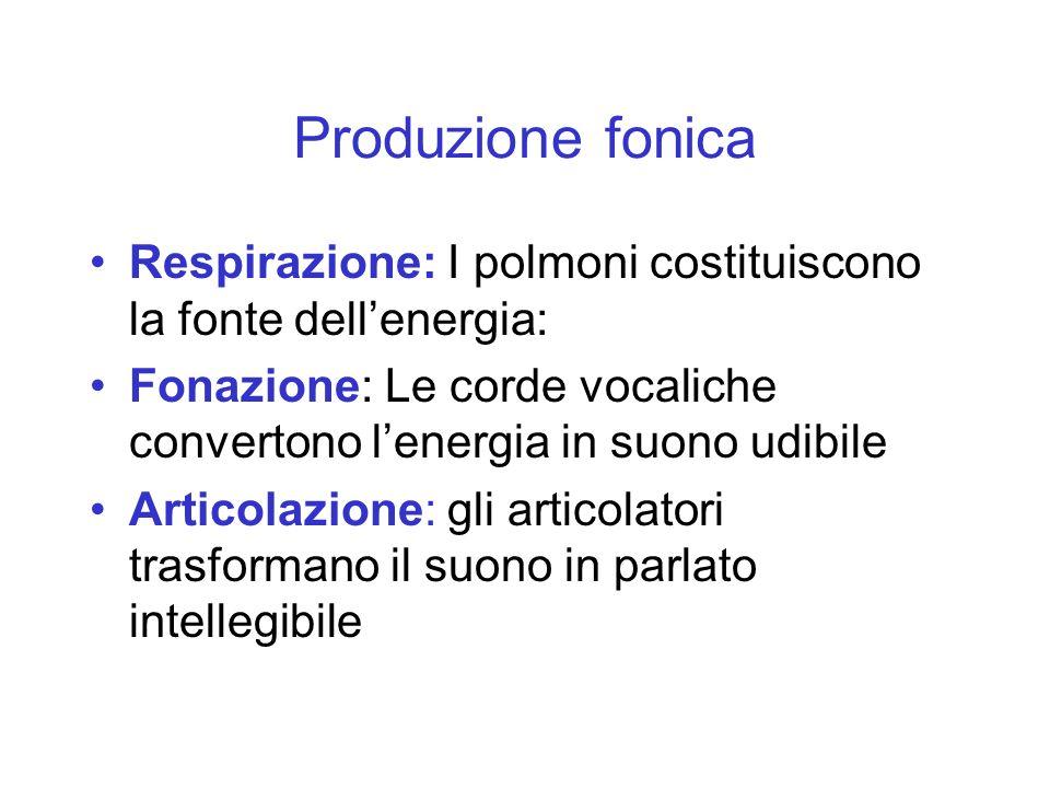 Produzione fonica Respirazione: I polmoni costituiscono la fonte dellenergia: Fonazione: Le corde vocaliche convertono lenergia in suono udibile Artic