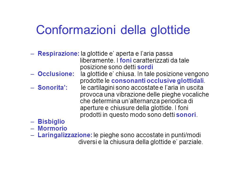 Conformazioni della glottide –Respirazione: la glottide e aperta e laria passa liberamente. I foni caratterizzati da tale posizione sono detti sordi –