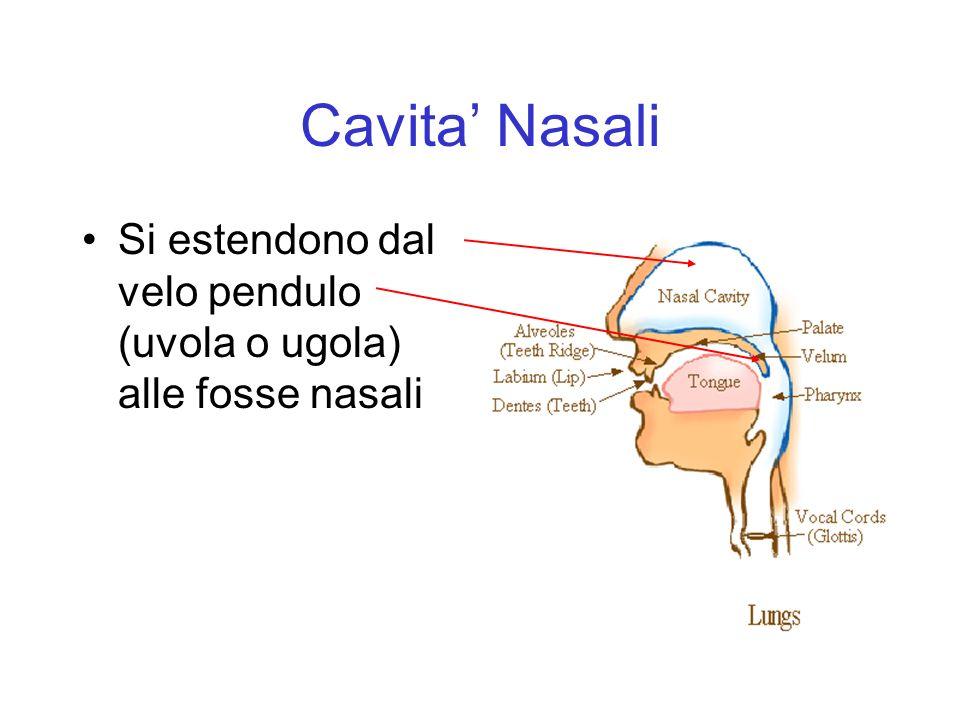 Cavita Nasali Si estendono dal velo pendulo (uvola o ugola) alle fosse nasali