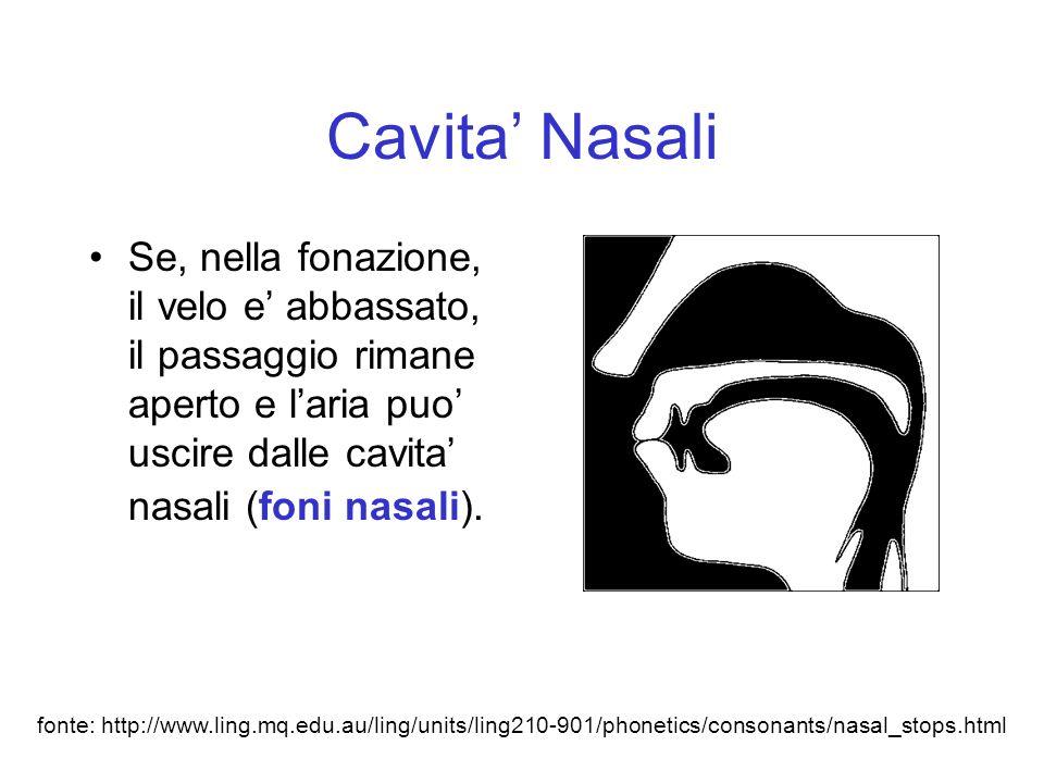 Cavita Nasali Se, nella fonazione, il velo e abbassato, il passaggio rimane aperto e laria puo uscire dalle cavita nasali (foni nasali). fonte: http:/
