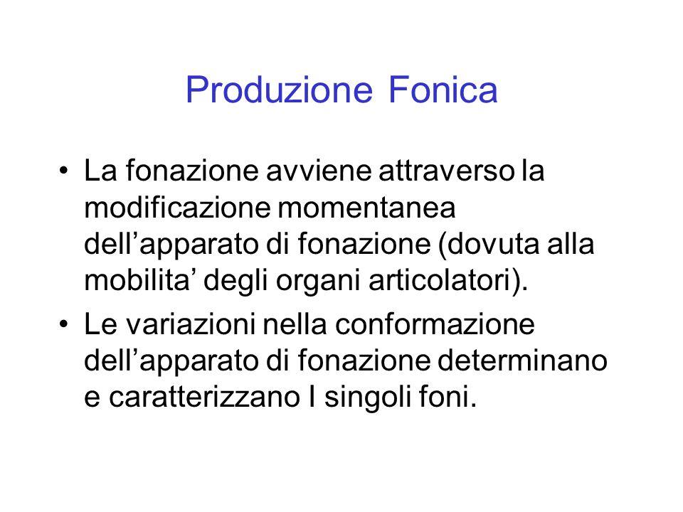 Produzione Fonica La fonazione avviene attraverso la modificazione momentanea dellapparato di fonazione (dovuta alla mobilita degli organi articolator