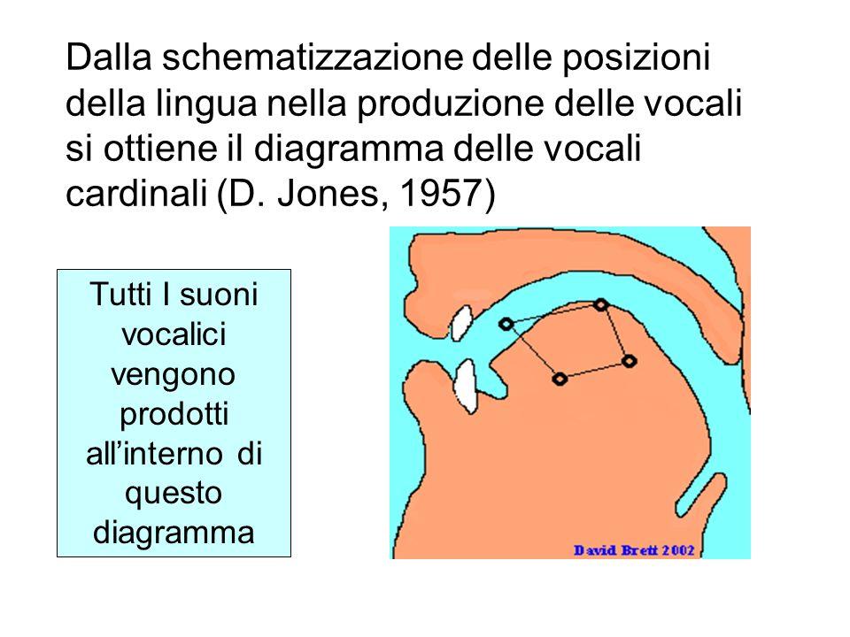 Dalla schematizzazione delle posizioni della lingua nella produzione delle vocali si ottiene il diagramma delle vocali cardinali (D. Jones, 1957) Tutt