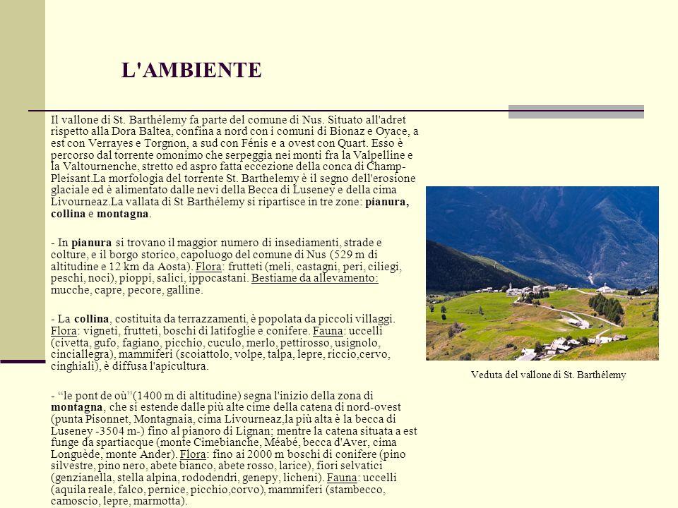 L'AMBIENTE Il vallone di St. Barthélemy fa parte del comune di Nus. Situato all'adret rispetto alla Dora Baltea, confina a nord con i comuni di Bionaz