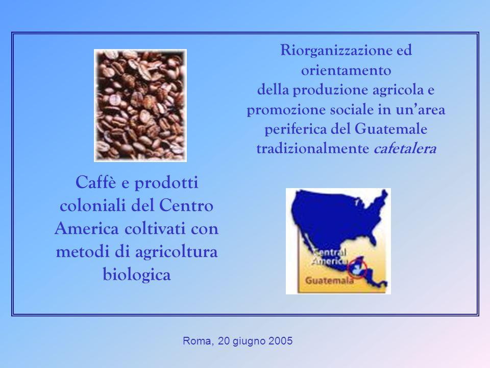 Roma, 20 giugno 2005 Caffè e prodotti coloniali del Centro America coltivati con metodi di agricoltura biologica Riorganizzazione ed orientamento della produzione agricola e promozione sociale in unarea periferica del Guatemale tradizionalmente cafetalera