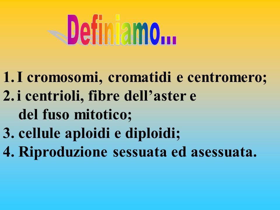 1.I cromosomi, cromatidi e centromero; 2.i centrioli, fibre dellaster e del fuso mitotico; 3. cellule aploidi e diploidi; 4. Riproduzione sessuata ed