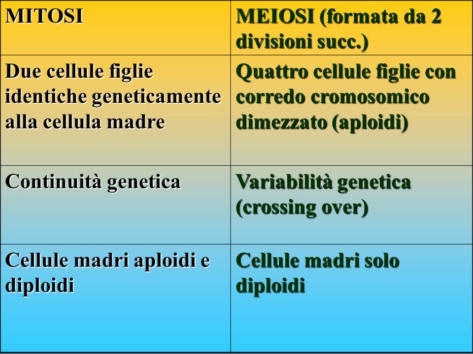 MITOSI MEIOSI (formata da 2 divisioni succ.) Due cellule figlie identiche geneticamente alla cellula madre Quattro cellule figlie con corredo cromosom