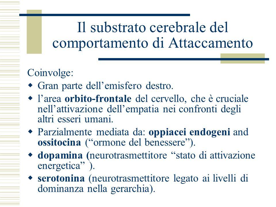 Il substrato cerebrale del comportamento di Attaccamento Coinvolge: Gran parte dellemisfero destro. larea orbito-frontale del cervello, che è cruciale