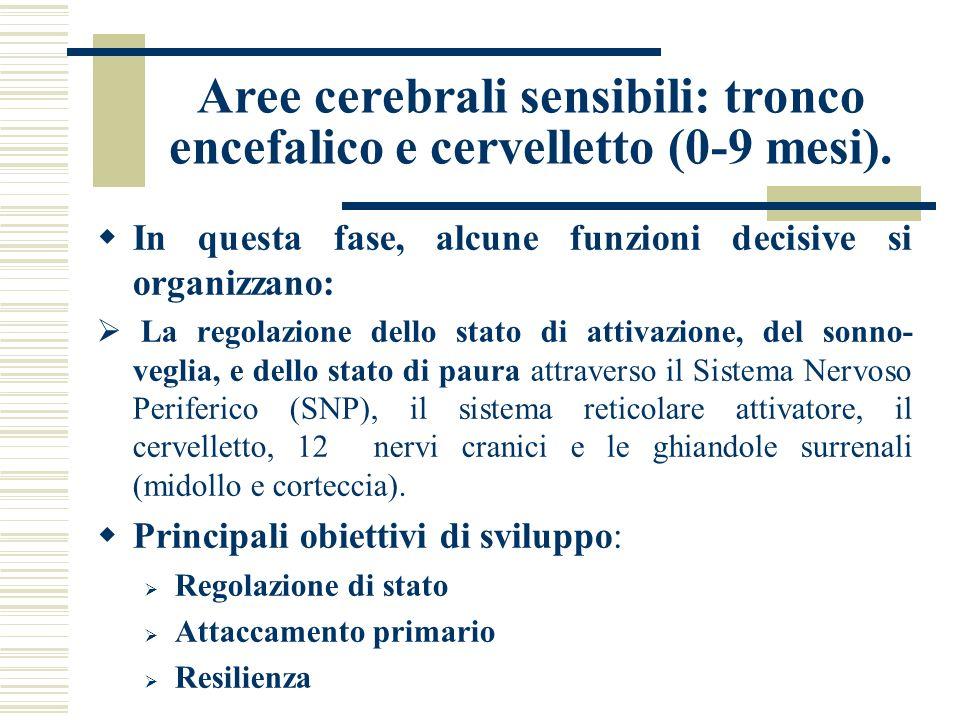 Aree cerebrali sensibili: tronco encefalico e cervelletto (0-9 mesi). In questa fase, alcune funzioni decisive si organizzano: La regolazione dello st