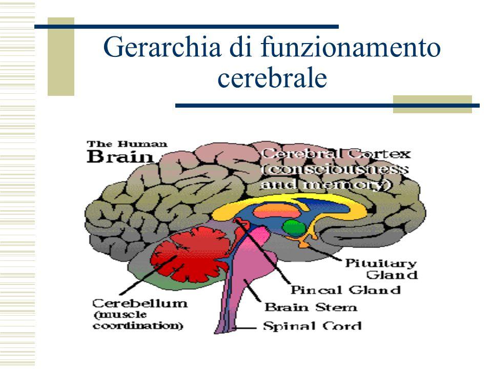 Gerarchia di funzionamento cerebrale