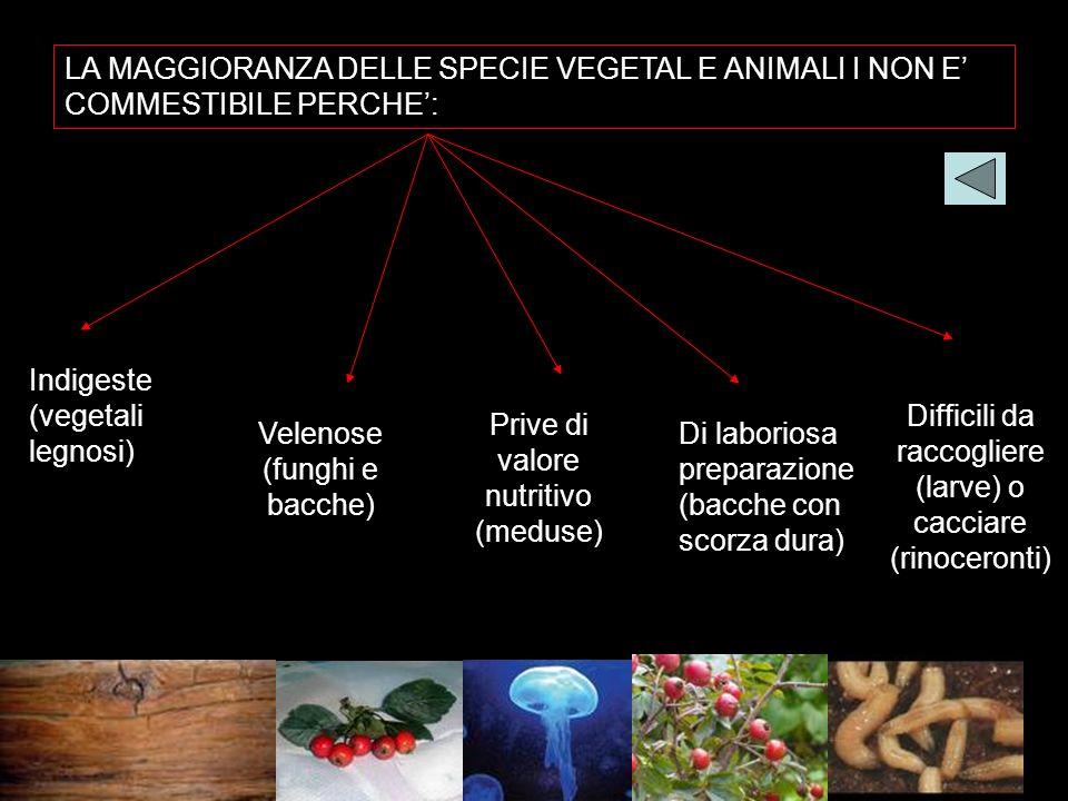 LA MAGGIORANZA DELLE SPECIE VEGETAL E ANIMALI I NON E COMMESTIBILE PERCHE: Indigeste (vegetali legnosi) Velenose (funghi e bacche) Prive di valore nut