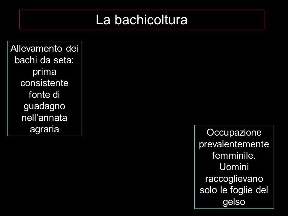 La bachicoltura Allevamento dei bachi da seta: prima consistente fonte di guadagno nellannata agraria Occupazione prevalentemente femminile.