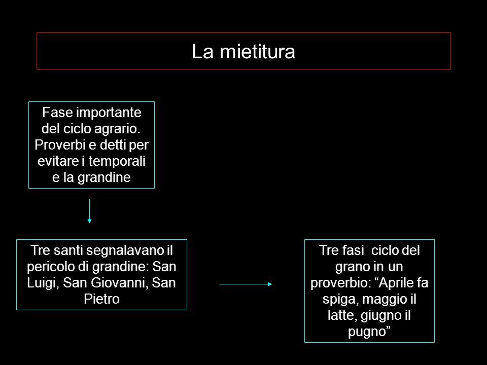 La mietitura Fase importante del ciclo agrario.