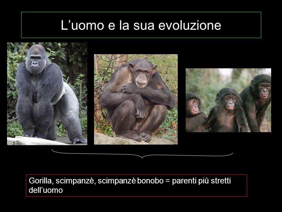 Luomo e la sua evoluzione Gorilla, scimpanzè, scimpanzè bonobo = parenti più stretti delluomo