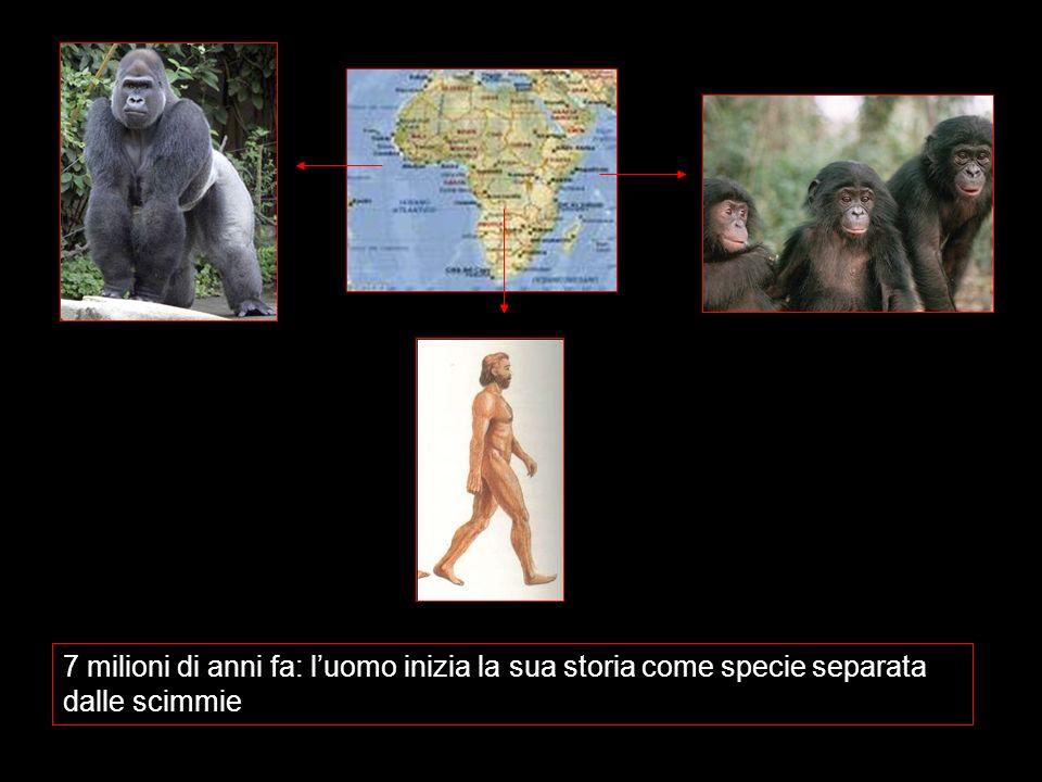7 milioni di anni fa: luomo inizia la sua storia come specie separata dalle scimmie
