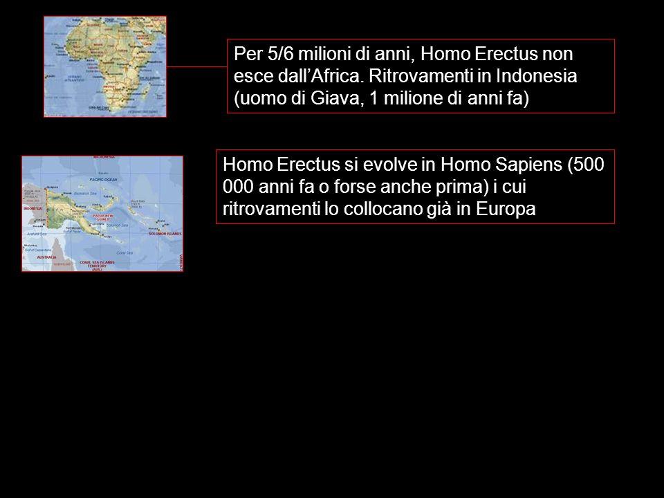 Per 5/6 milioni di anni, Homo Erectus non esce dallAfrica. Ritrovamenti in Indonesia (uomo di Giava, 1 milione di anni fa) Homo Erectus si evolve in H