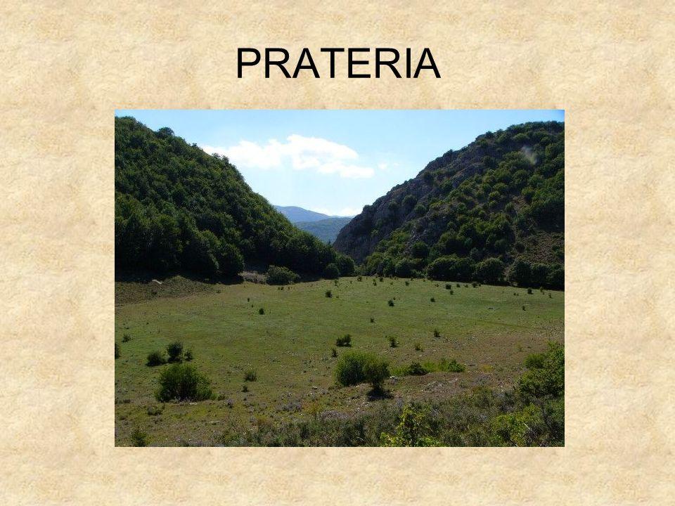 PRATERIA