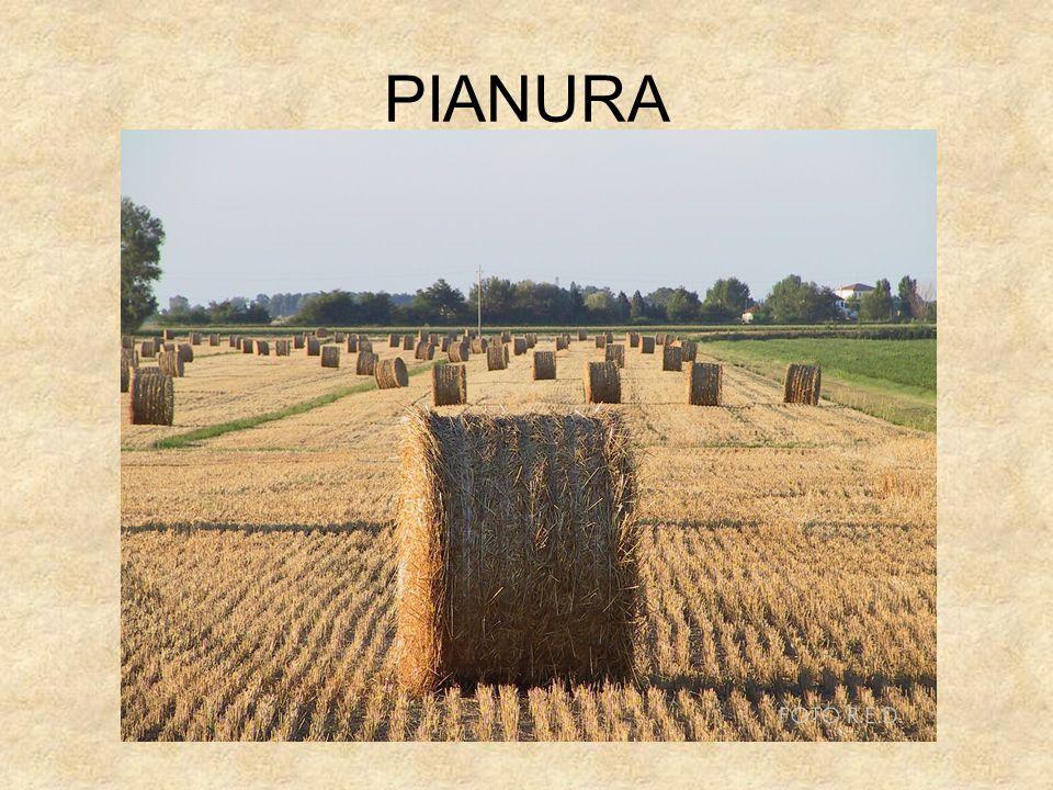 PIANURA