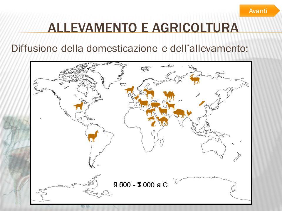 ALLEVAMENTO E AGRICOLTURA Diffusione della domesticazione e dellallevamento: 9.000 - 7.000 a.C.5.500 - 3.000 a.C.2.500 - 1.000 a.C. Avanti