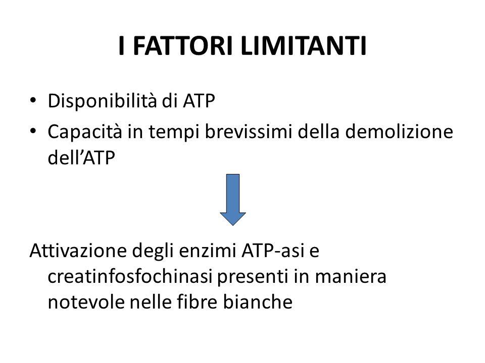 I FATTORI LIMITANTI Disponibilità di ATP Capacità in tempi brevissimi della demolizione dellATP Attivazione degli enzimi ATP-asi e creatinfosfochinasi