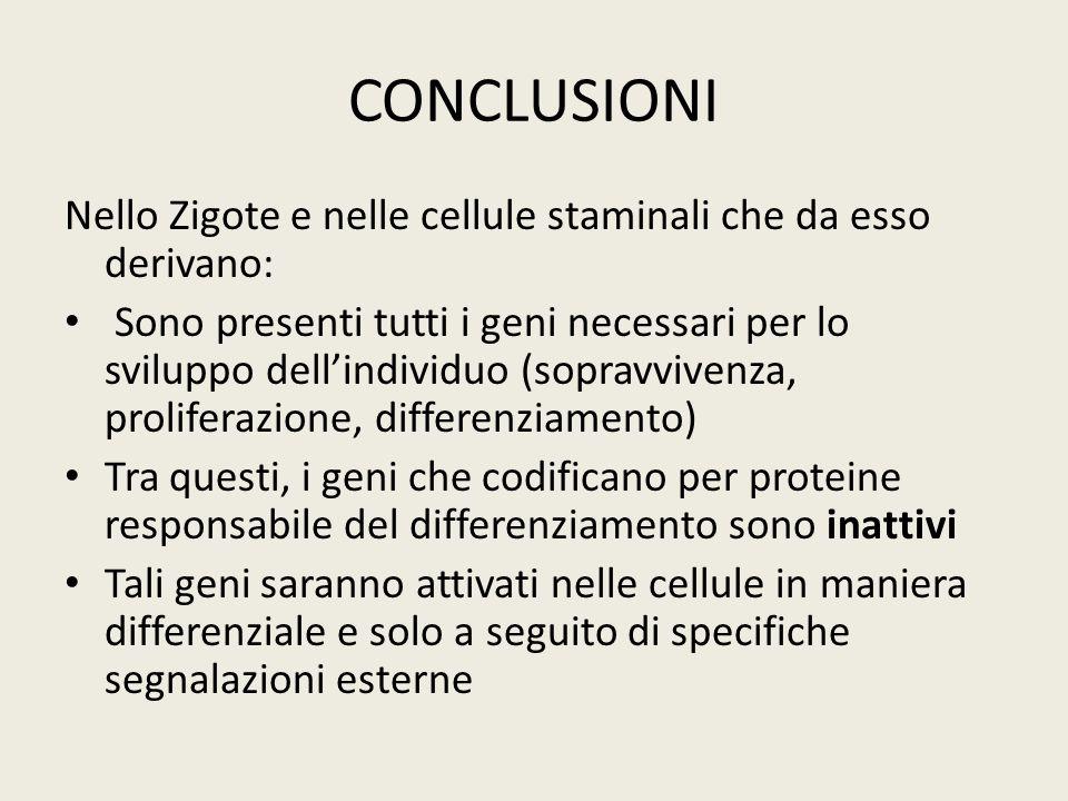CONCLUSIONI Nello Zigote e nelle cellule staminali che da esso derivano: Sono presenti tutti i geni necessari per lo sviluppo dellindividuo (sopravviv