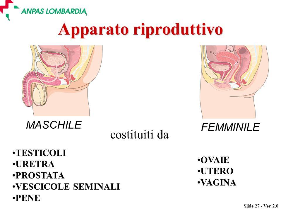 Slide 27 - Ver. 2.0 MASCHILE OVAIE UTERO VAGINA TESTICOLI URETRA PROSTATA VESCICOLE SEMINALI PENE costituiti da Apparato riproduttivo FEMMINILE