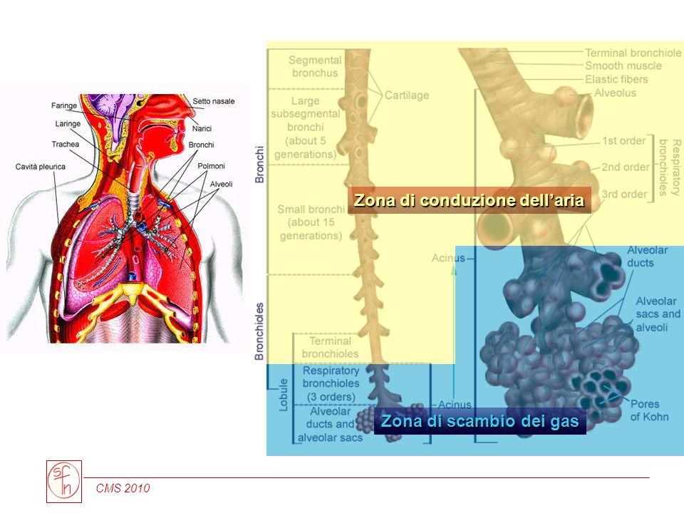 CMS 2010 Zona di conduzione dellaria Zona di scambio dei gas