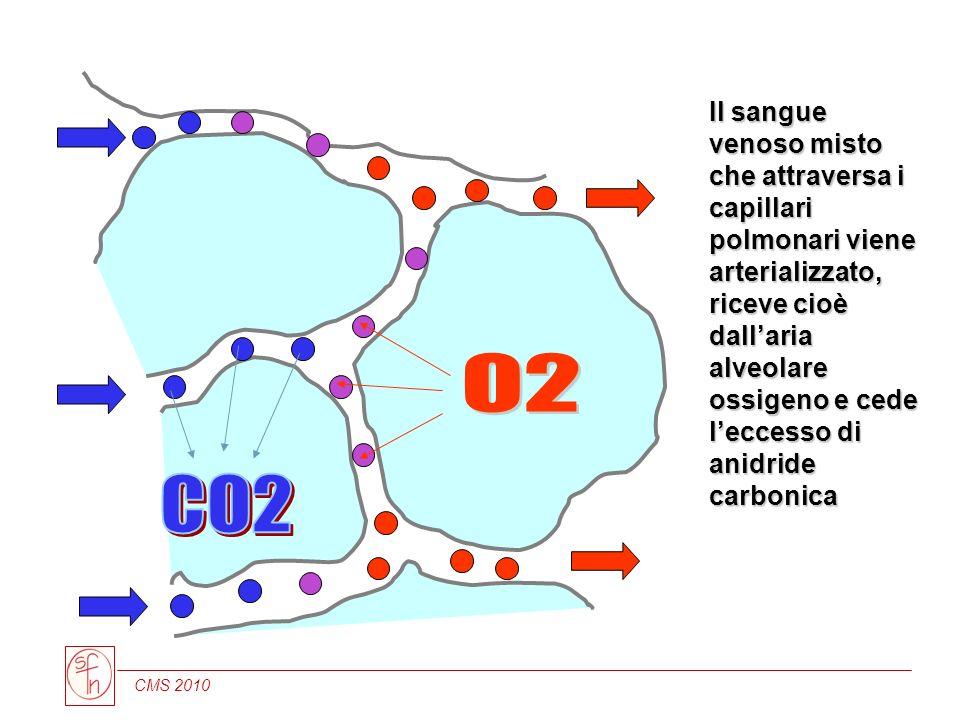 CMS 2010 Il sangue venoso misto che attraversa i capillari polmonari viene arterializzato, riceve cioè dallaria alveolare ossigeno e cede leccesso di