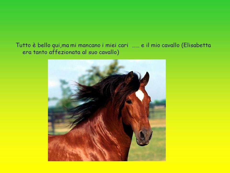 Tutto è bello qui,ma mi mancano i miei cari …… e il mio cavallo (Elisabetta era tanto affezionata al suo cavallo)