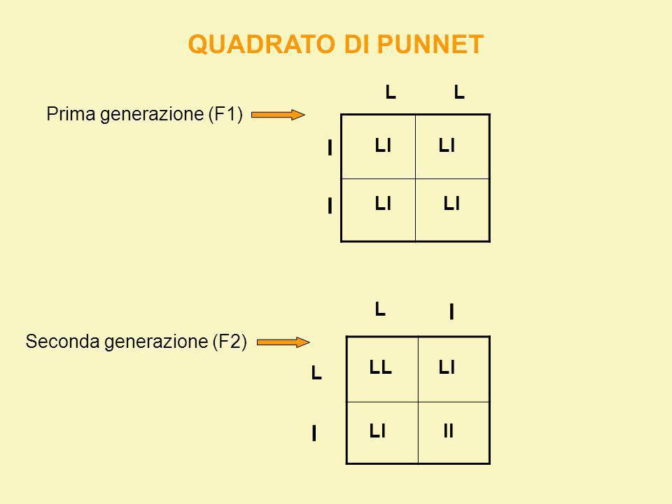 TRASIMISSIONE DI 2 CARATTERI CONTEMPORANEAMENTE X Seme: Verde (gg) Rugoso (ll) Seme: Giallo (GG) liscio (LL) ggll GGLL gl GL GgLl (P) 1° gen.