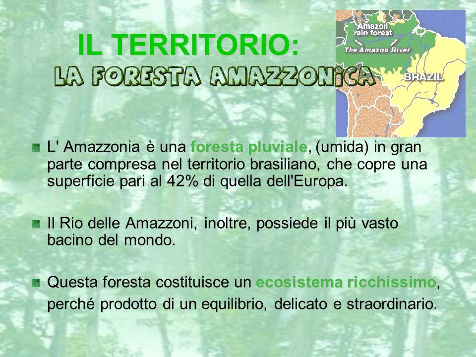 IL TERRITORIO: IL TERRITORIO: L' Amazzonia è una foresta pluviale pluviale, (umida) in gran parte compresa nel territorio brasiliano, che copre una su