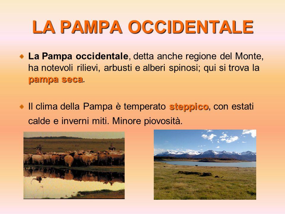 LA PAMPA OCCIDENTALE pampa seca La Pampa occidentale, detta anche regione del Monte, ha notevoli rilievi, arbusti e alberi spinosi; qui si trova la pa