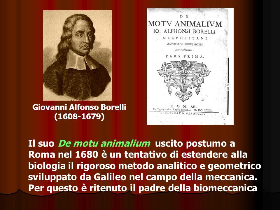 Giovanni Alfonso Borelli (1608-1679) Il suo De motu animalium uscito postumo a Roma nel 1680 è un tentativo di estendere alla biologia il rigoroso met