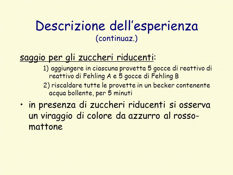Descrizione dellesperienza (continuaz.) saggio per gli zuccheri riducenti: 1) aggiungere in ciascuna provetta 5 gocce di reattivo di reattivo di Fehli
