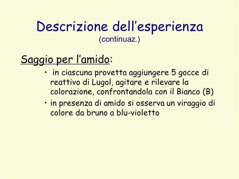 Descrizione dellesperienza (continuaz.) Saggio per lamido: in ciascuna provetta aggiungere 5 gocce di reattivo di Lugol, agitare e rilevare la coloraz