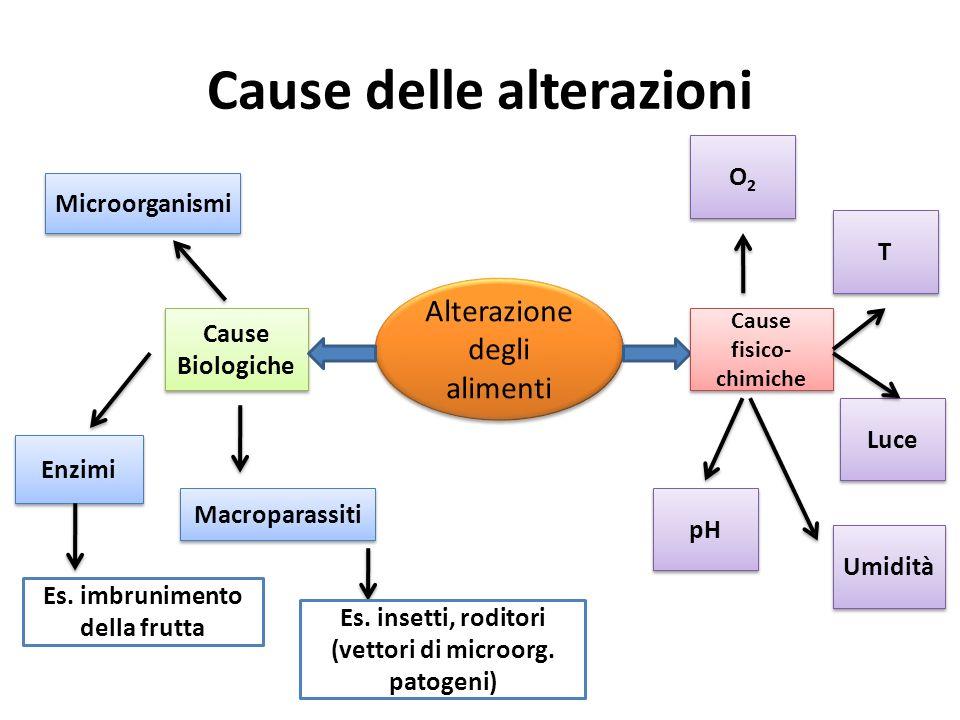 Cause delle alterazioni Alterazione degli alimenti Cause Biologiche Cause fisico- chimiche Microorganismi Enzimi Macroparassiti O2O2 O2O2 pH Luce T T