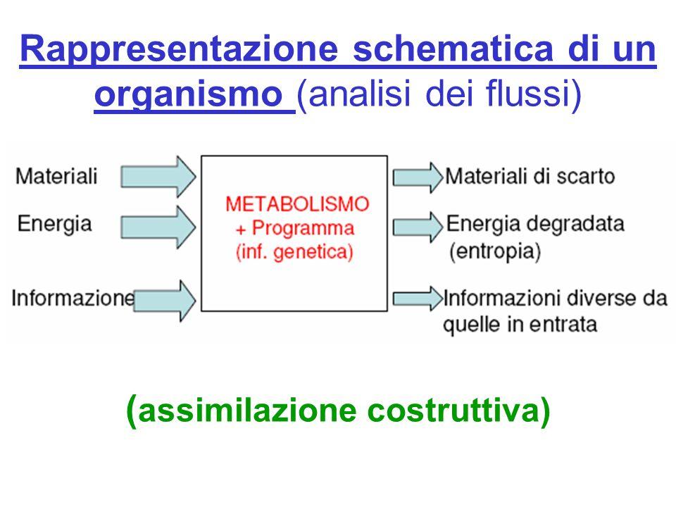 Rappresentazione schematica di un organismo (analisi dei flussi) ( assimilazione costruttiva)
