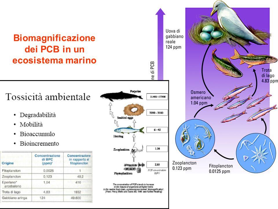 Biomagnificazione dei PCB in un ecosistema marino