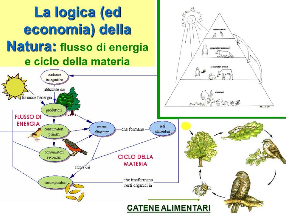 Lenergia è dunque un flusso continuo che giunge dal Sole e si diffonde attraverso i diversi livelli trofici, mentre la materia (aria, acqua, terra e cibo) viene continuamente riciclata grazie ai CICLI BIOGEOCHIMICI (cicli del carbonio, dellazoto, del fosforo e dellacqua)