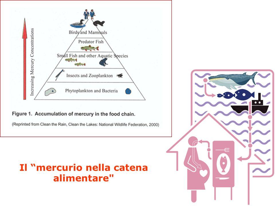 Il mercurio nella catena alimentare