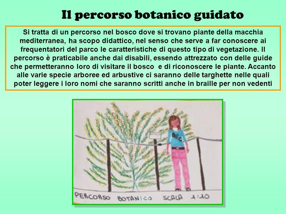 Il percorso botanico guidato Si tratta di un percorso nel bosco dove si trovano piante della macchia mediterranea, ha scopo didattico, nel senso che serve a far conoscere ai frequentatori del parco le caratteristiche di questo tipo di vegetazione.