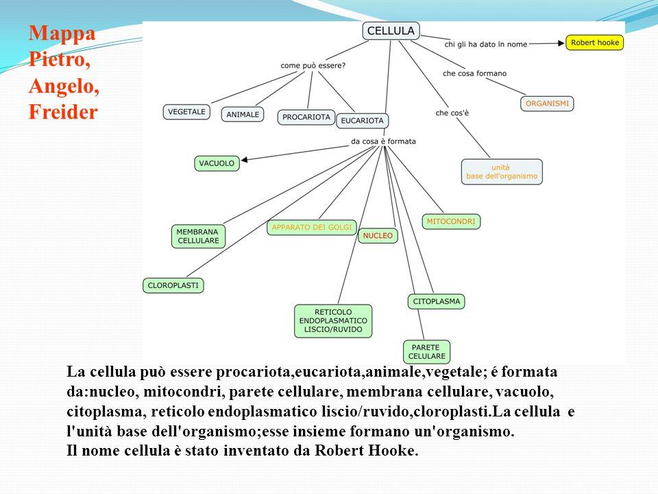 Mappa Pietro, Angelo, Freider La cellula può essere procariota,eucariota,animale,vegetale; é formata da:nucleo, mitocondri, parete cellulare, membrana