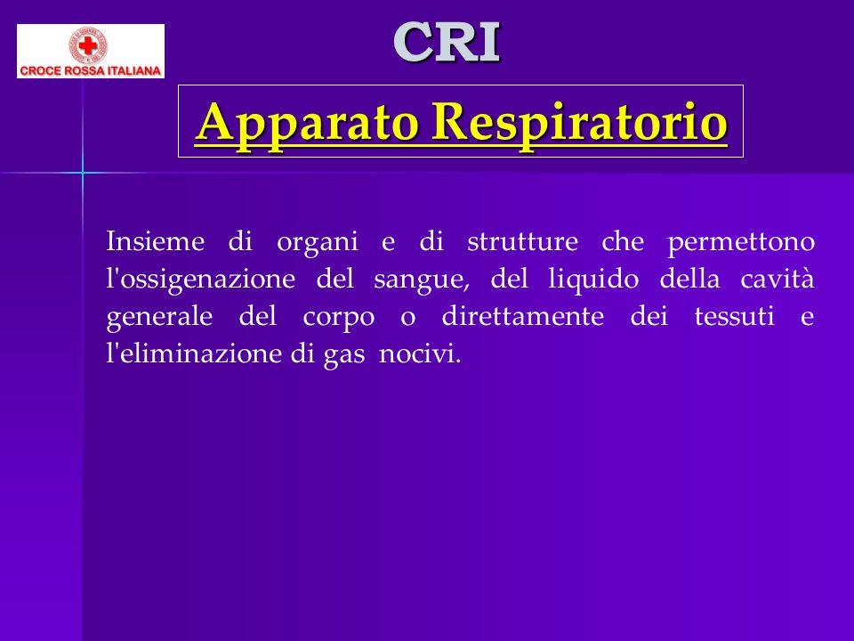 CRI Insieme di organi e di strutture che permettono l'ossigenazione del sangue, del liquido della cavità generale del corpo o direttamente dei tessuti