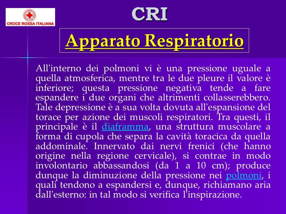 CRI All'interno dei polmoni vi è una pressione uguale a quella atmosferica, mentre tra le due pleure il valore è inferiore; questa pressione negativa