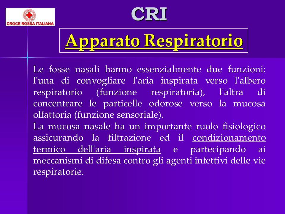 CRI Le fosse nasali hanno essenzialmente due funzioni: l'una di convogliare l'aria inspirata verso l'albero respiratorio (funzione respiratoria), l'al