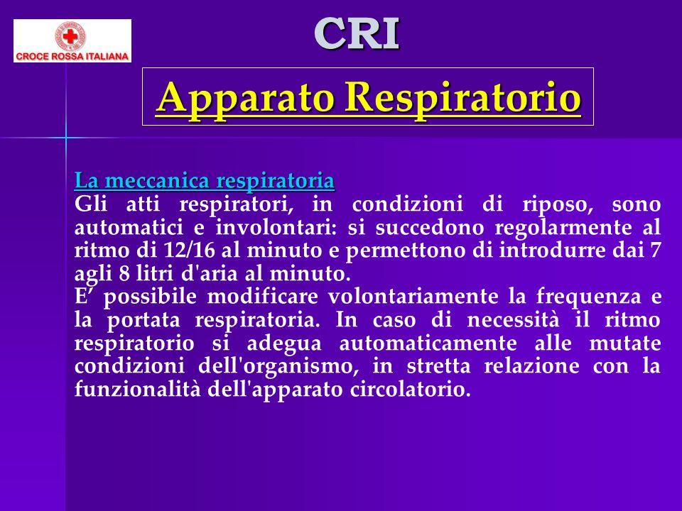 CRI La meccanica respiratoria Gli atti respiratori, in condizioni di riposo, sono automatici e involontari: si succedono regolarmente al ritmo di 12/1