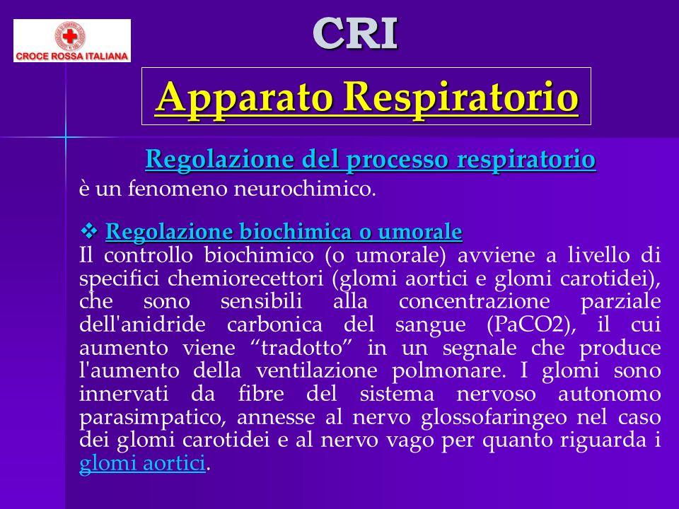 CRI Apparato Respiratorio Regolazione del processo respiratorio è un fenomeno neurochimico. Regolazione biochimica o umorale Regolazione biochimica o